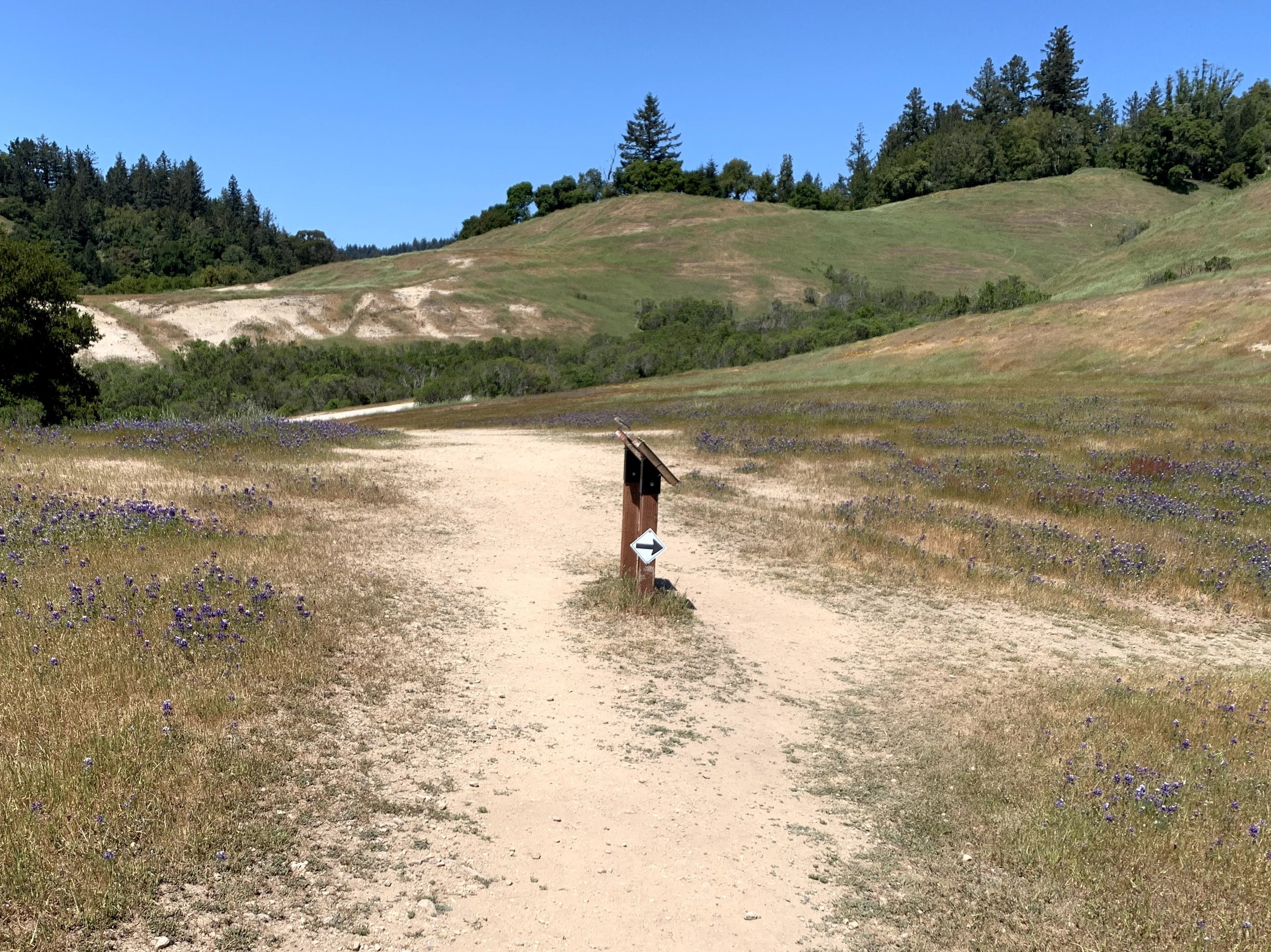 A crossroads of footpaths in green hills on a sunny day. A ridge along the top third has evergreen trees against a cloudless sky. The right and left foreground have purple lupines. A sign in the center has a small white sign with a black arrow pointing right.